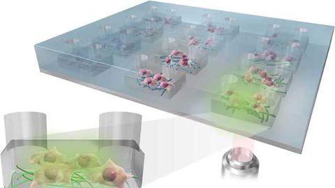 New Platform for Culturing Stem Cells