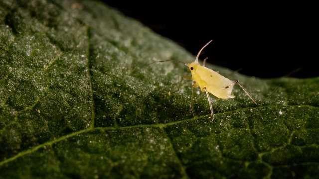 Discovering New Genes in Pest Species