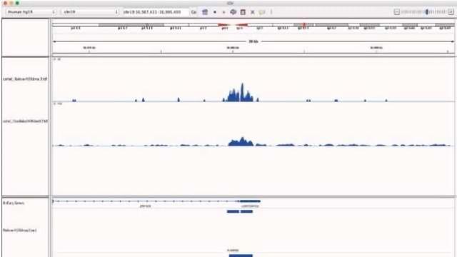 Comparing Sensitivity & Efficiency of N-ChIP-seq and X-ChIP-seq kits