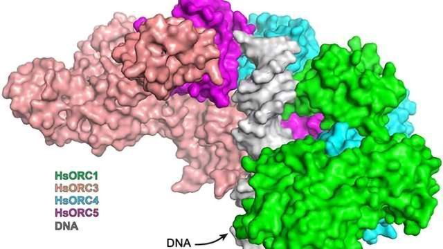 Protein Complex Captured at High Resolution
