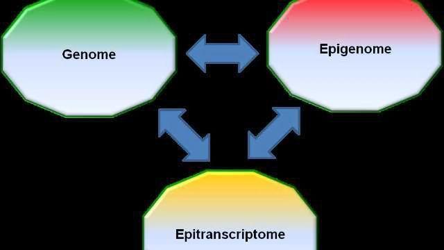 Enter the Epitranscriptome