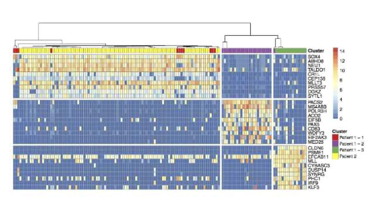 Tracking Cancer Genetics at the Single Cell Level