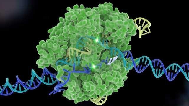 EPO to Grant Historic CRISPR Patent