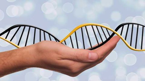 Solving a 30 Year Old Genetic Mystery