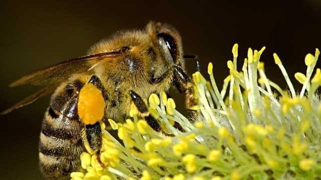 New Tool Estimates GM Pollen Spread