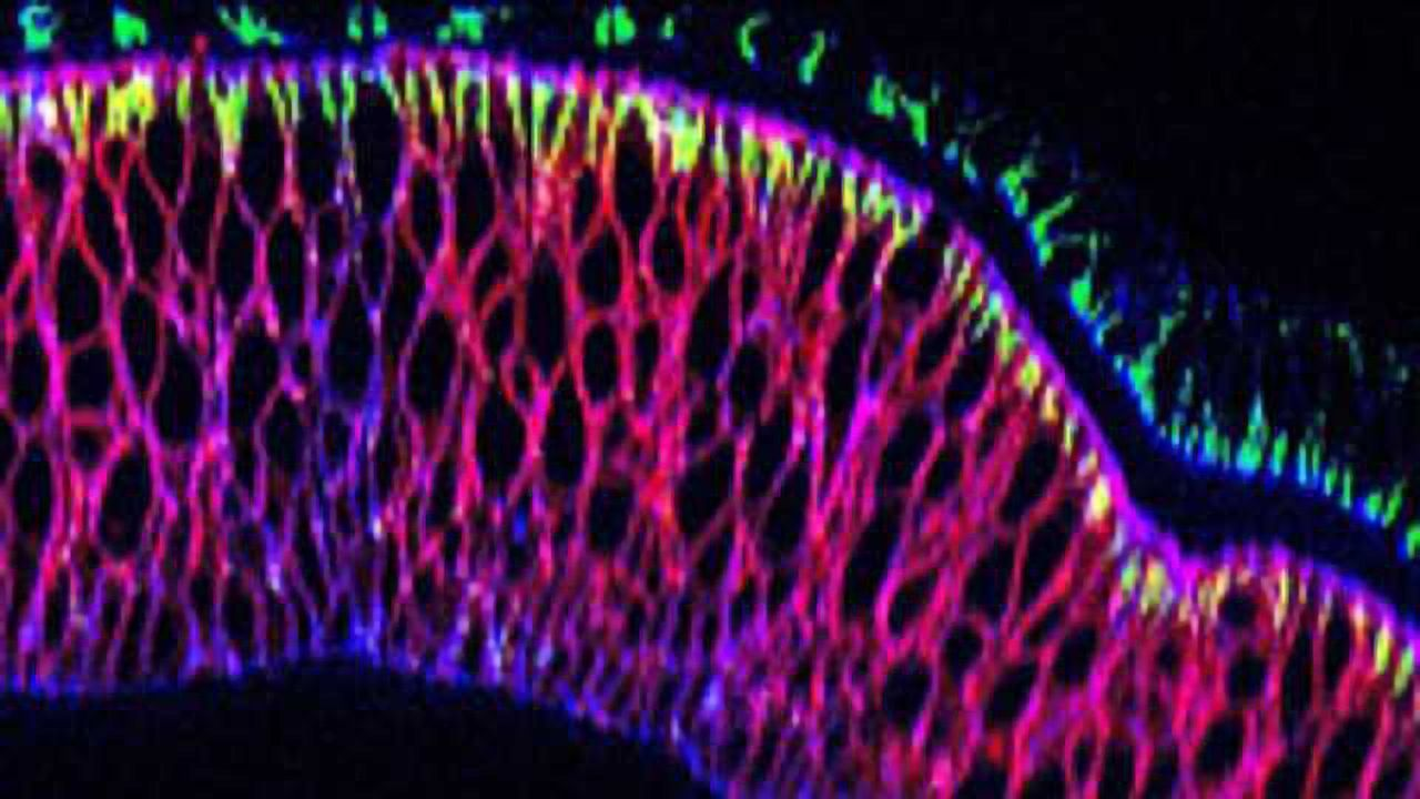 Nanobody Tool Relocates Proteins