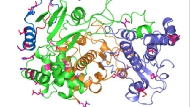 Protein Critical to Zika Virus Found