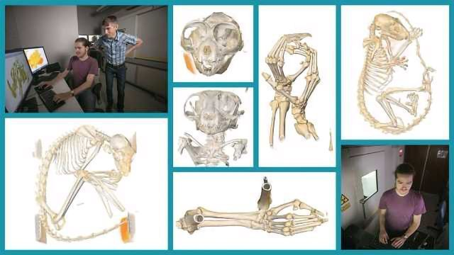 X-Ray Scanning Immortalizes Endangered Primates