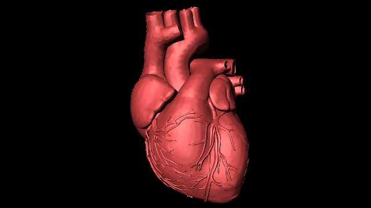 Macrophages Help Maintain A Healthy Heart Rhythm