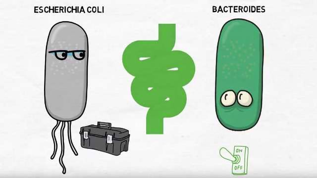 A Genetic Scalpel for Modifying the Bacteria in Your Gut