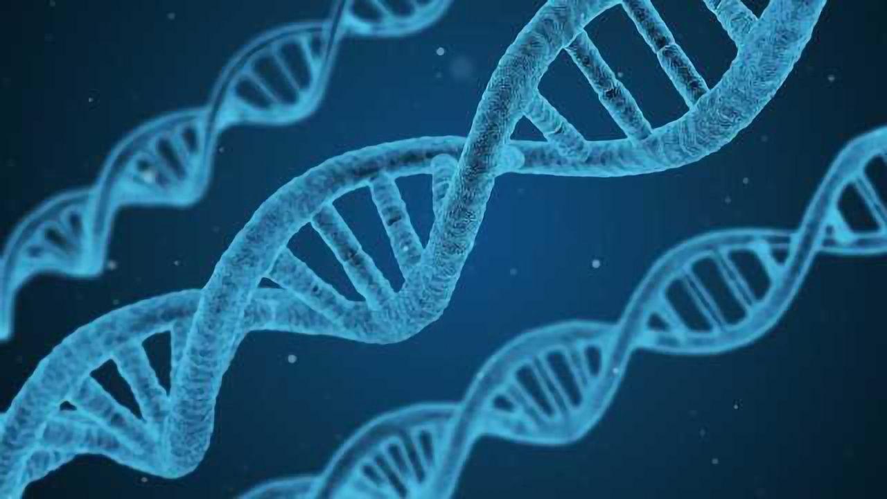 A Promising Model for a Devastating Genetic Deficiency