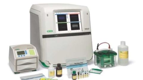 Fluorescent Multiplex Detection of Proteins in Western Blots