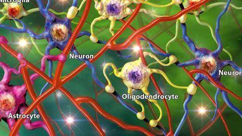 Target C3 Complement in Astrocytes