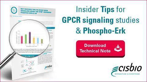 Insider Tips for GPCR signaling studies & phospho-Erk