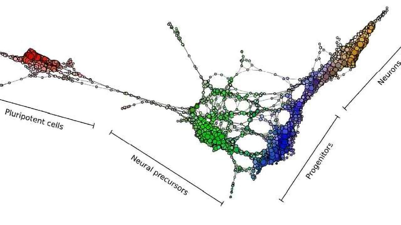 New Tool Provides Roadmap for Cell Development