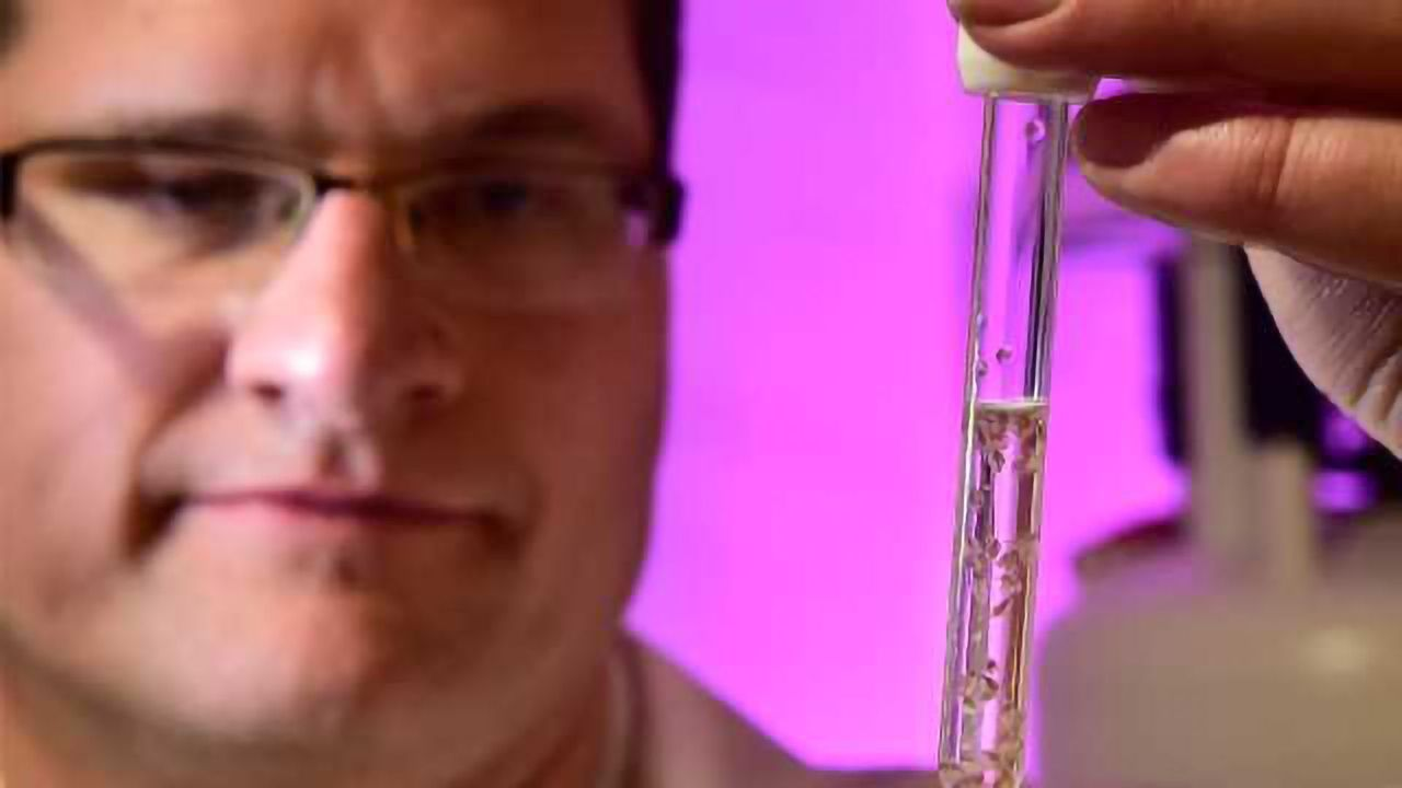 "New Technique Provides ""Molecular Window"" into Living Organisms"