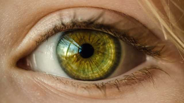 NIH Launches 3-D Retina Organoid Challenge