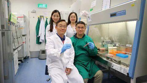 Spheropreservation Method Improves Stem Cell Storage