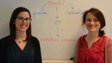 Metabolic Driver of Breast Cancer Metastasis Identified