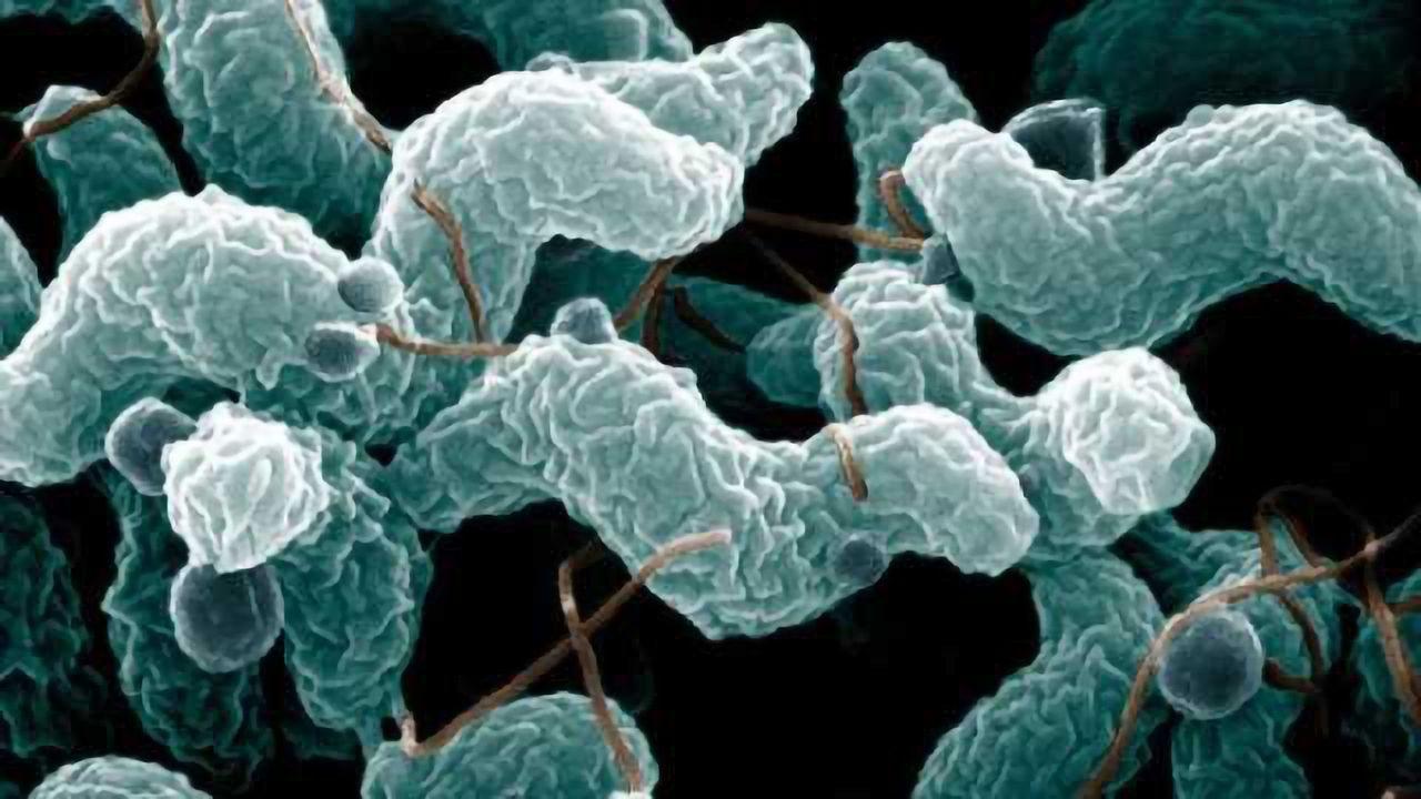 Novel, Low Tech Method for Environmental Sampling Of Campylobacter