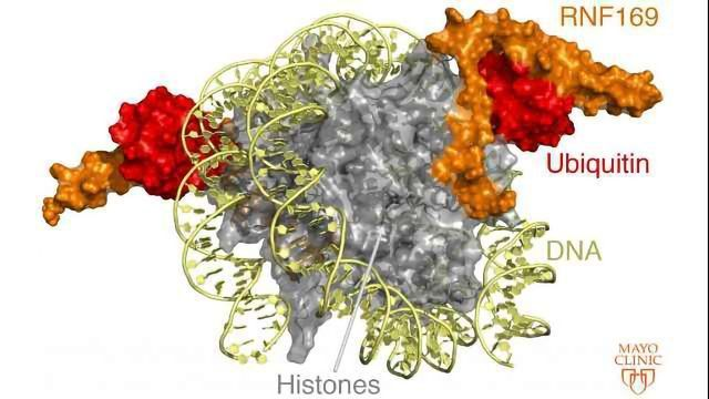 Knowledge of DNA Repair Mechanisms Advances