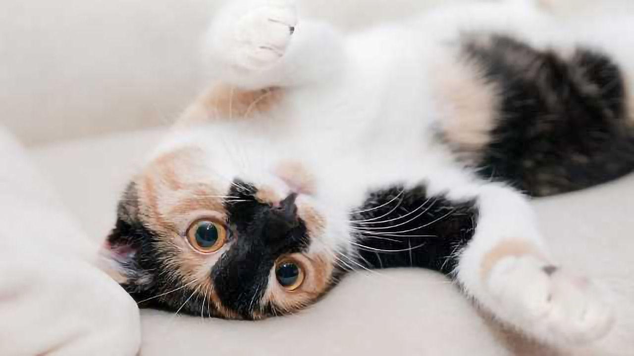 Cat Genomics Study Reveals Rare Genetic Disorders