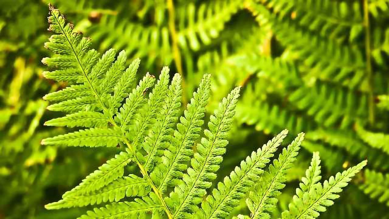 Stem Cells in Plants and Animals Behave Surprisingly Similarly