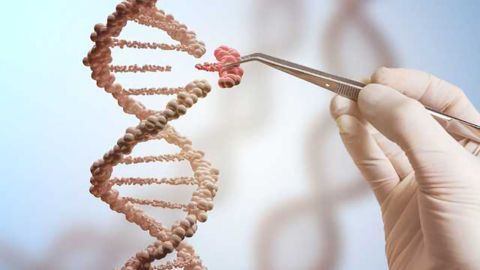CRISPR: Emerging applications for genome editing technology