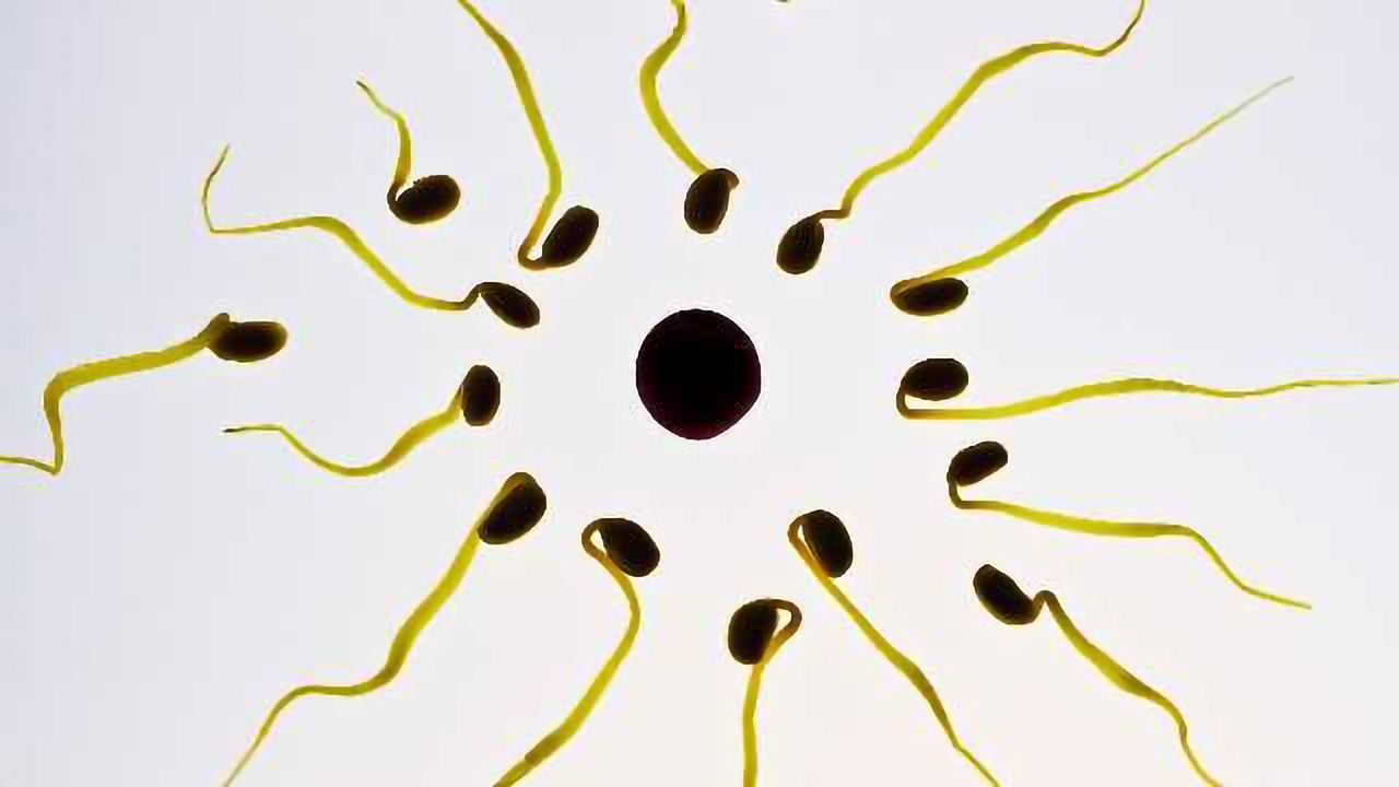 New 'Sperm Radar' Test May Uncover Secrets About Male Infertility
