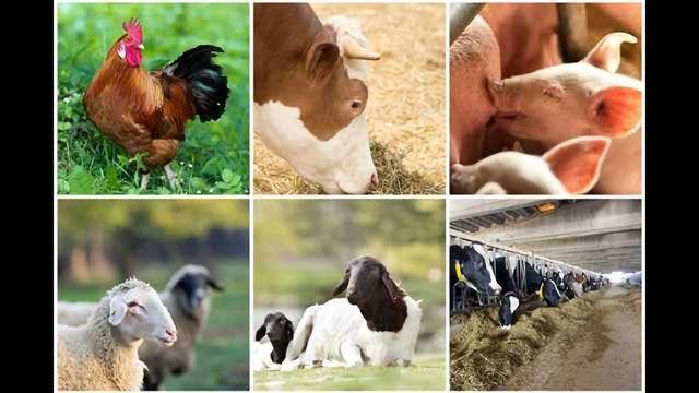 sbeadex™ livestock kit – One kit. Any sample type.