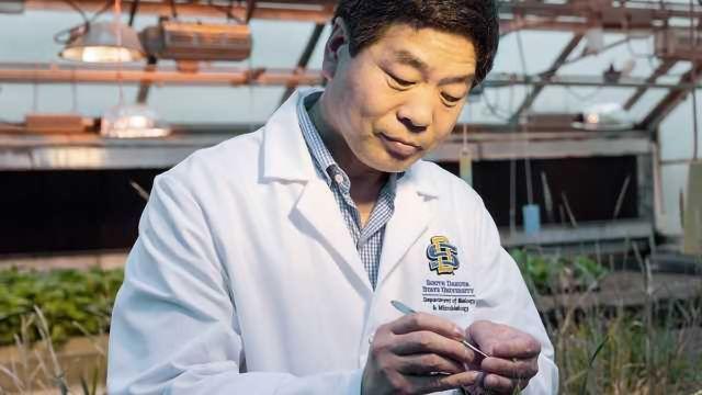 Increasing Wheat Yields with CRISPR