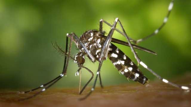 Clinical Trial of Vaccine for Chikungunya Virus Begins
