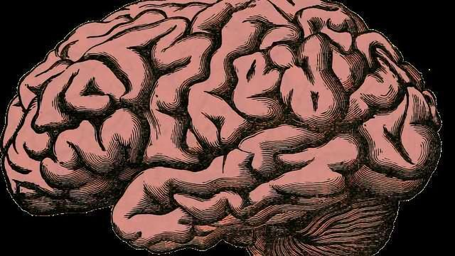 Research Into Degenerative Brain Disease Uses Qlucore Omics Explorer