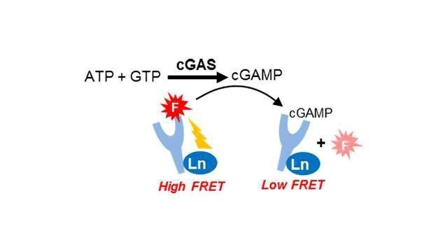 BellBrook Labs Receives Funding For Commercialization of cGMP-AMP Assay