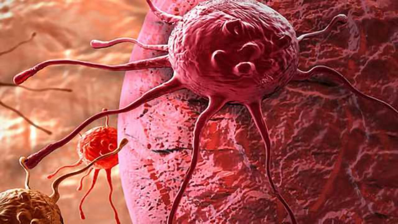 Newly Revealed Cellular Pathway May Lead to Cancer Therapies