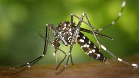 Eisai and Broad Institute Initiative to Further Develop Malaria Treatments