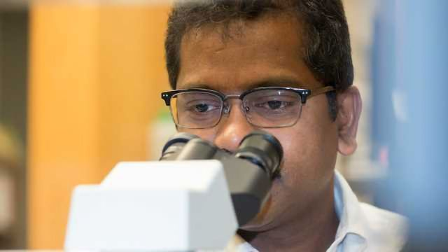 Grape-based Compounds May Kill Colon Cancer Stem Cells