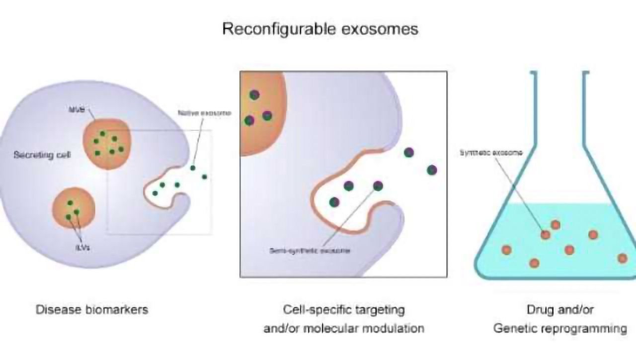 Exosomes Offer Significant Potential in Detecting and Treating Disease