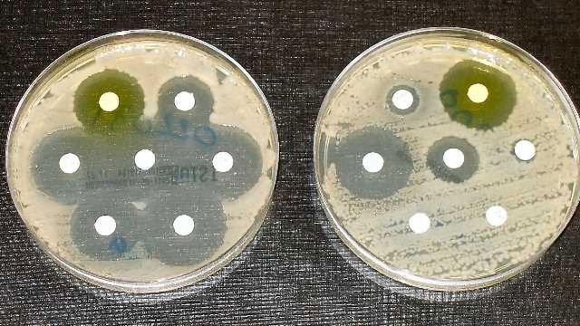 LifeArc, Dstl and CDRD Collaborate to Identify Antibacterial Drug Targets