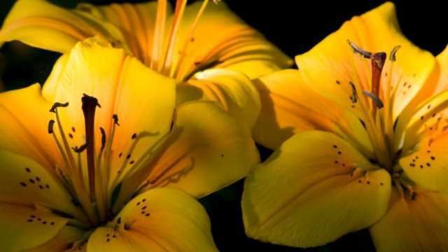 Flowers' Genome Duplication Contributes to Their Spectacular Diversity
