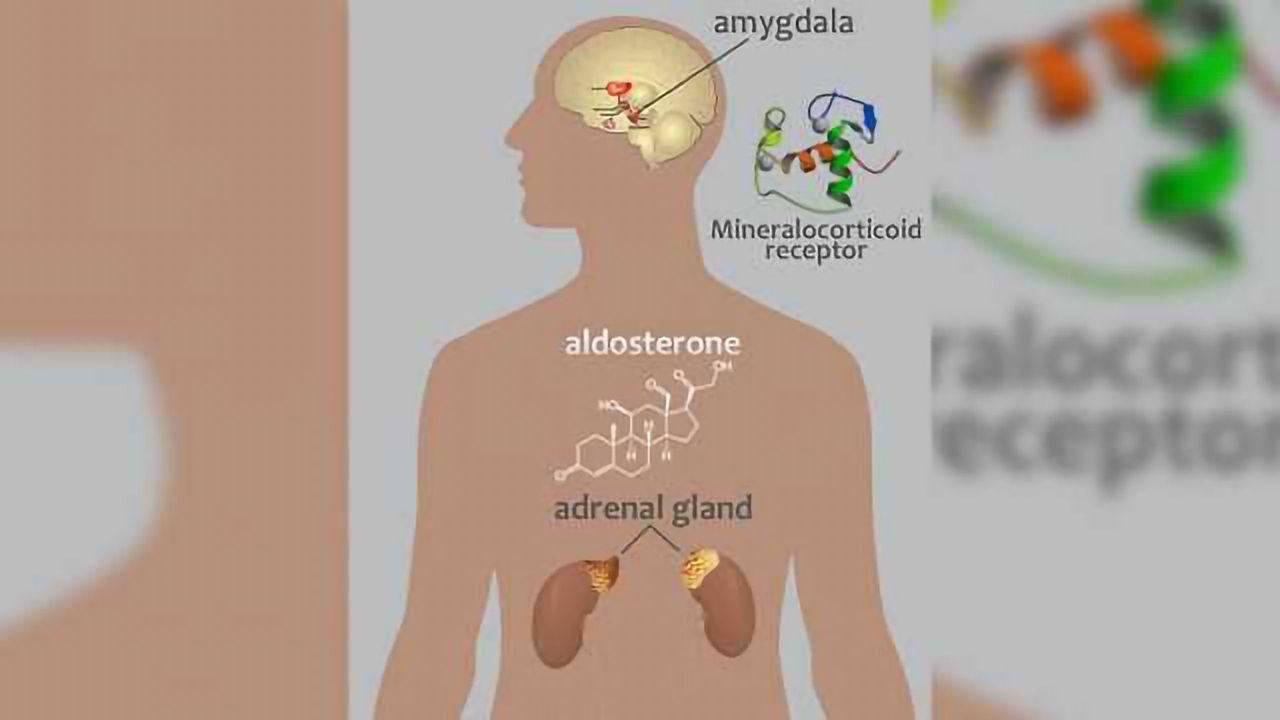 NIH links Aldosterone to Alcohol Use Disorder