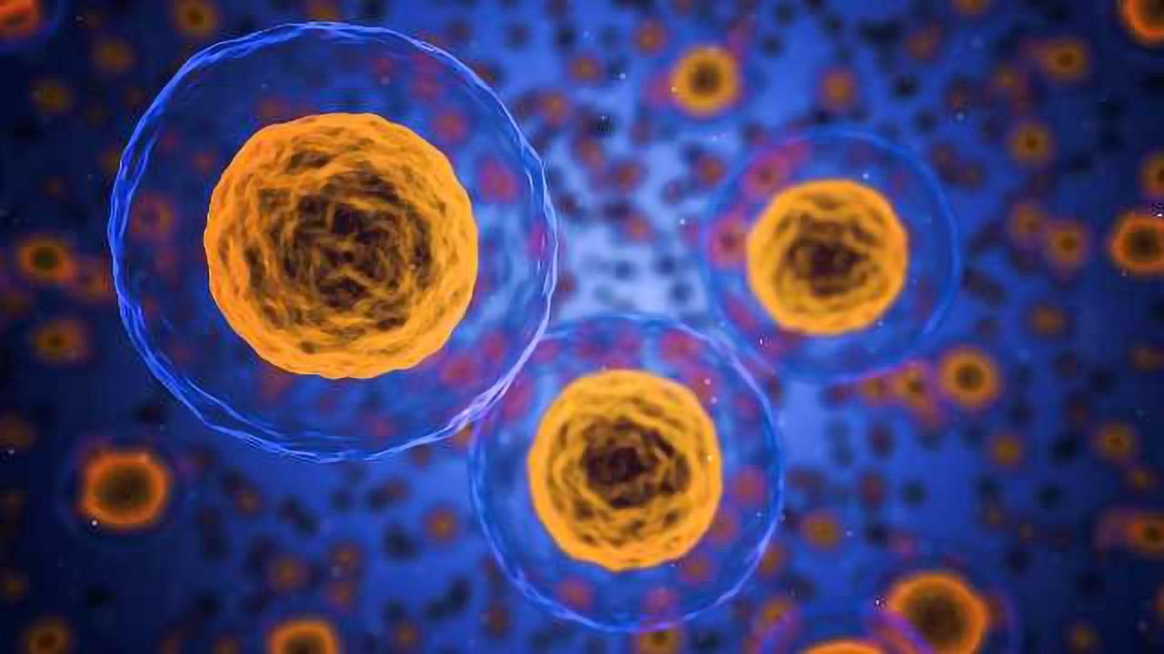 New Way Found to Boost Immunity in Fighting Cancer and Infections