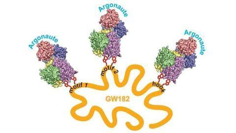 Structural Analysis Reveals How RNAi Self Multiplies its Gene Silencing Effects