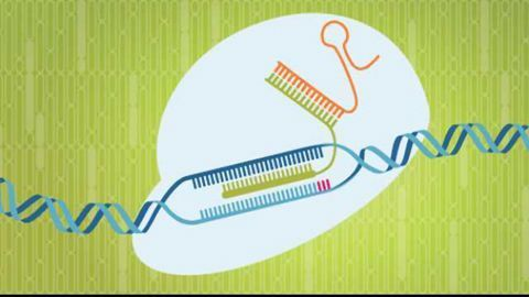 Stay On-Target With Novel, High-Fidelity Cas9