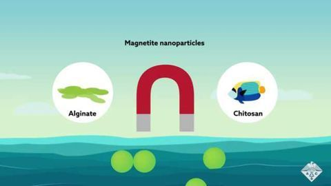 Magnetic Beads Bind Sunblock Chemicals to Remove them from the Ocean