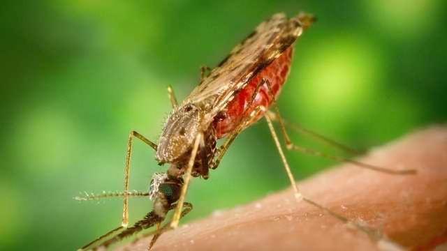 Using Saliva to Diagnose Zika