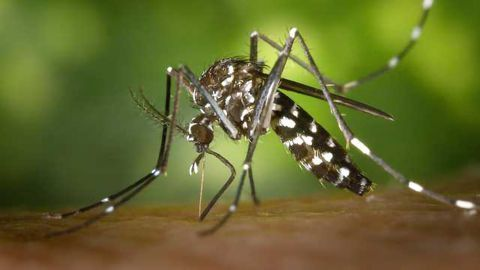 FDA Approves Emergency Use for Multiplex Zika Test