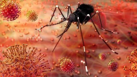 Zika Virus Infectivity Profile and Developing Tools to Fight it