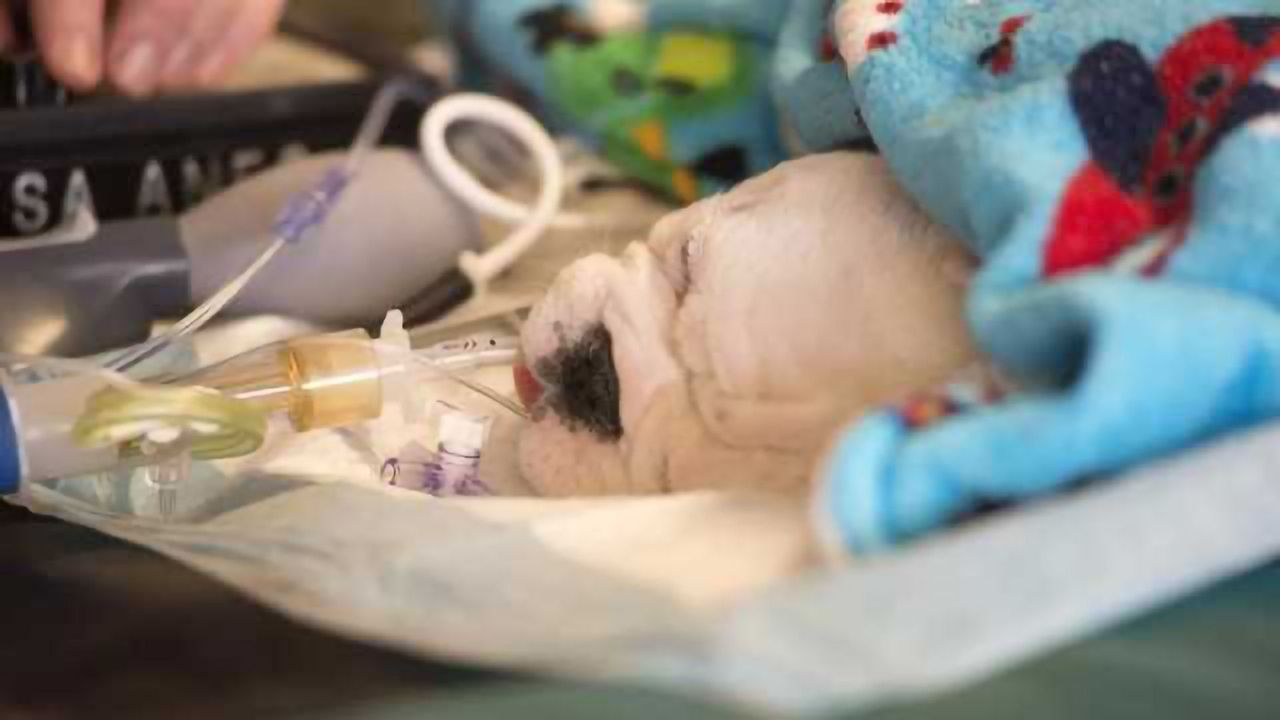 Stem Cell Treatment Helps Puppies With Spina Bifida