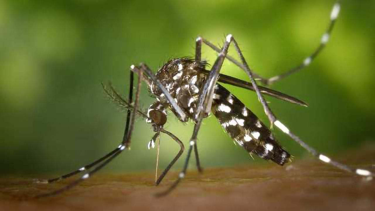 Fatal Attraction: GC-EAD Used to Develop Sweet-Smelling Potion to Kill Mosquitoes